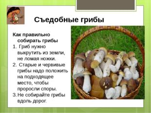 Съедобные грибы Как правильно собирать грибы Гриб нужно выкрутить из земли, н