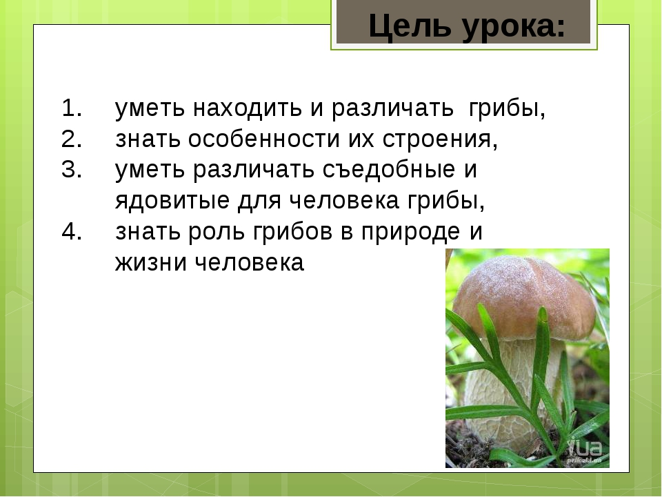 уметь находить и различать грибы, знать особенности их строения, уметь различ...