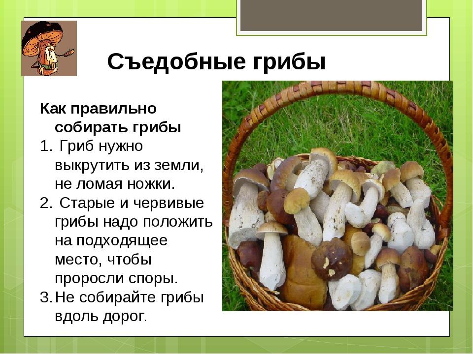 Как правильно сделать грибы