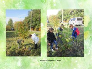 Акция «Посади лес!» 2014 г