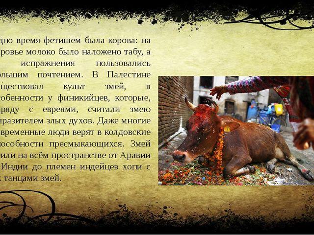 Одно время фетишем была корова: на коровье молоко было наложено табу, а ее ис...
