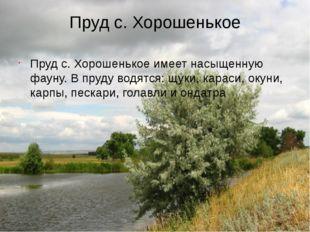 Пруд с. Хорошенькое Пруд с. Хорошенькое имеет насыщенную фауну. В пруду водят