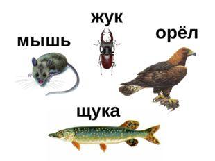 мышь жук орёл щука