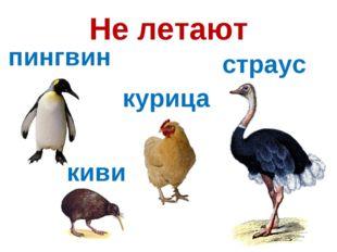 Не летают пингвин киви страус курица