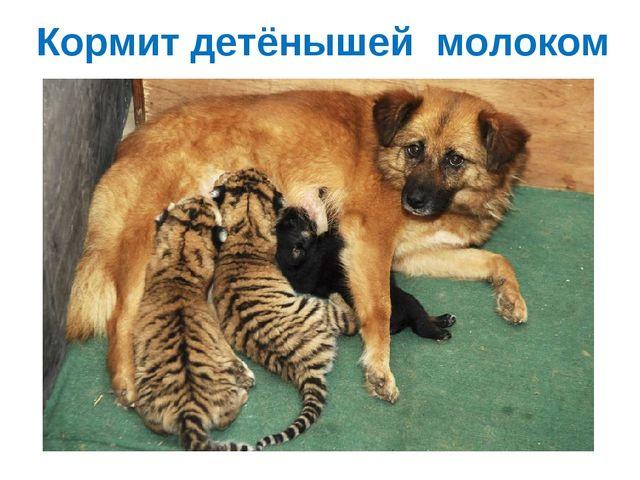 Кормит детёнышей молоком