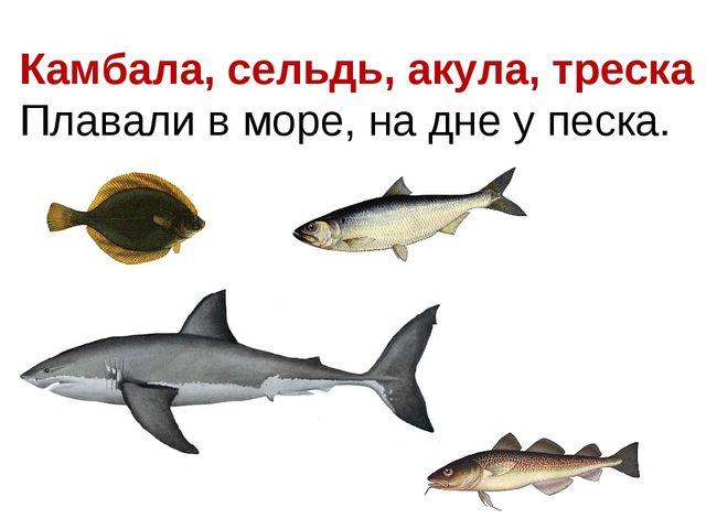 Камбала, сельдь, акула, треска Плавали в море, на дне у песка.