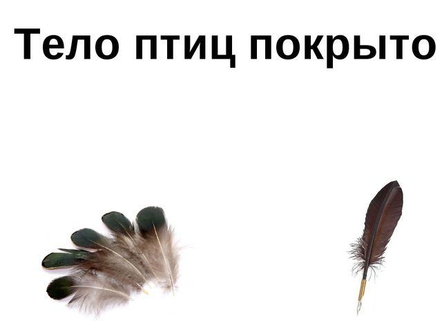 Тело птиц покрыто перьями