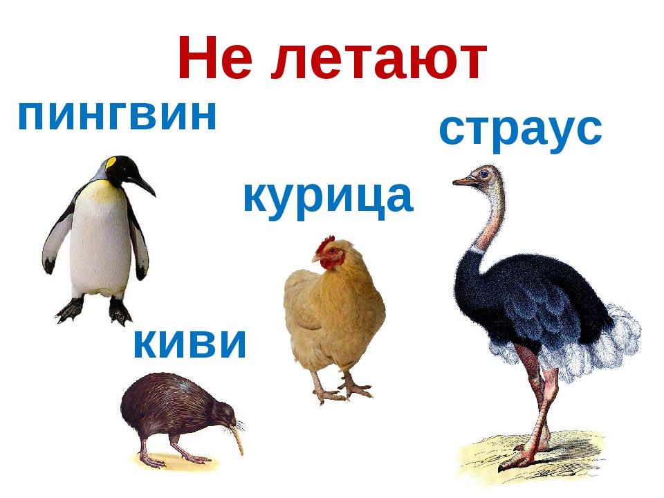 страус пингвин картинки привыкли выглядеть