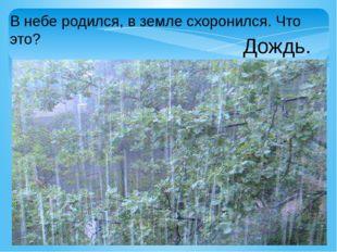 В небе родился, в земле схоронился. Что это? Дождь.