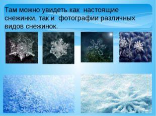 Там можно увидеть как настоящие снежинки, так и фотографии различных видов сн