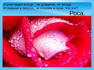 Утром падаю всегда – не дождинка, не звезда. И сверкаю в лопухах, на опушках