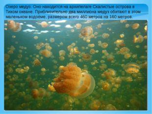 Озеро медуз. Оно находится на архипелаге Скалистые острова в Тихом океане. Пр