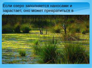 Если озеро заполняется наносами и зарастает, оно может превратиться в болото.
