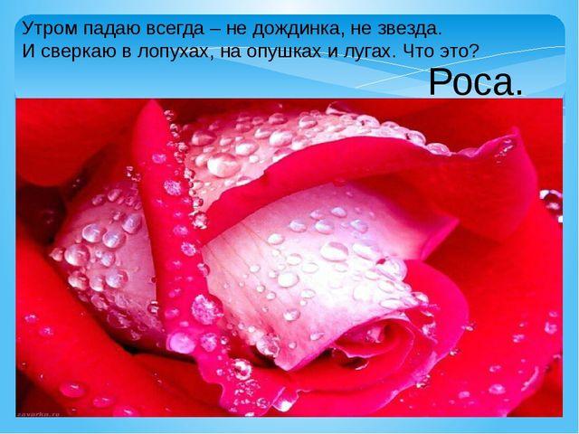 Утром падаю всегда – не дождинка, не звезда. И сверкаю в лопухах, на опушках...