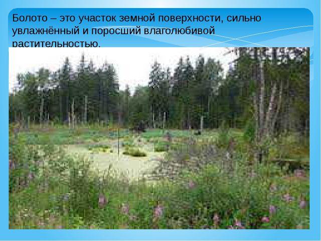Болото – это участок земной поверхности, сильно увлажнённый и поросший влагол...