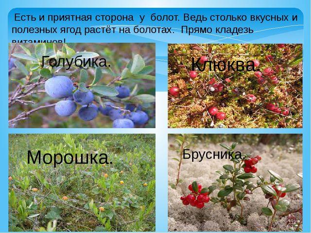 Есть и приятная сторона у болот. Ведь столько вкусных и полезных ягод растёт...