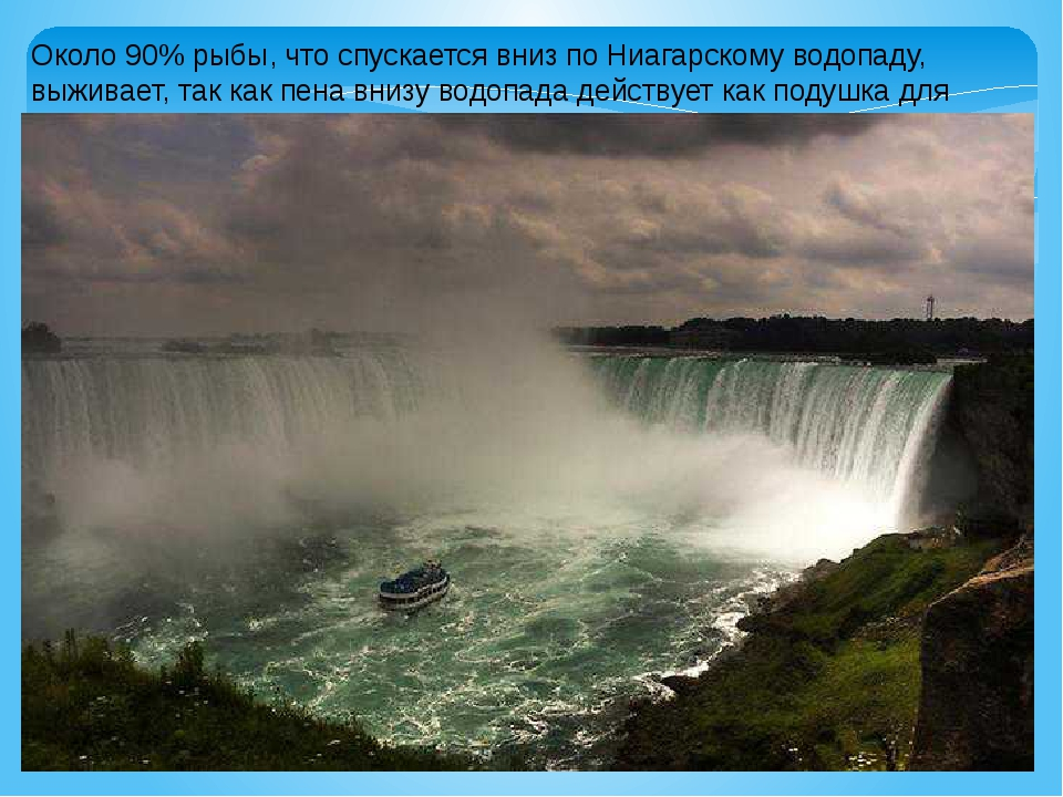 Около 90% рыбы, что спускается вниз по Ниагарскому водопаду, выживает, так ка...