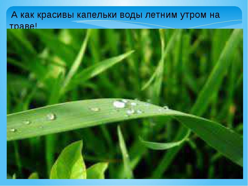 А как красивы капельки воды летним утром на траве!