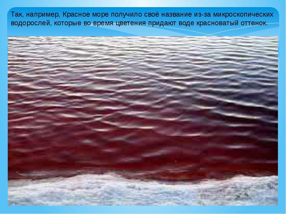 Так, например, Красное море получило своё название из-за микроскопических вод...