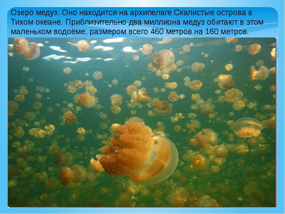 Озеро медуз. Оно находится на архипелаге Скалистые острова в Тихом океане. Пр...