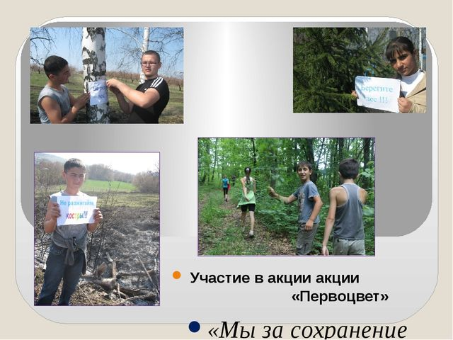 Участие в акции акции «Первоцвет» «Мы за сохранение лесов!»