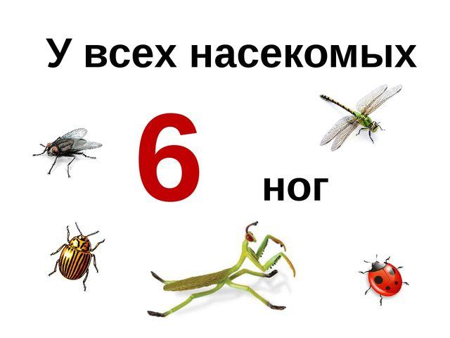 У всех насекомых 6 ног