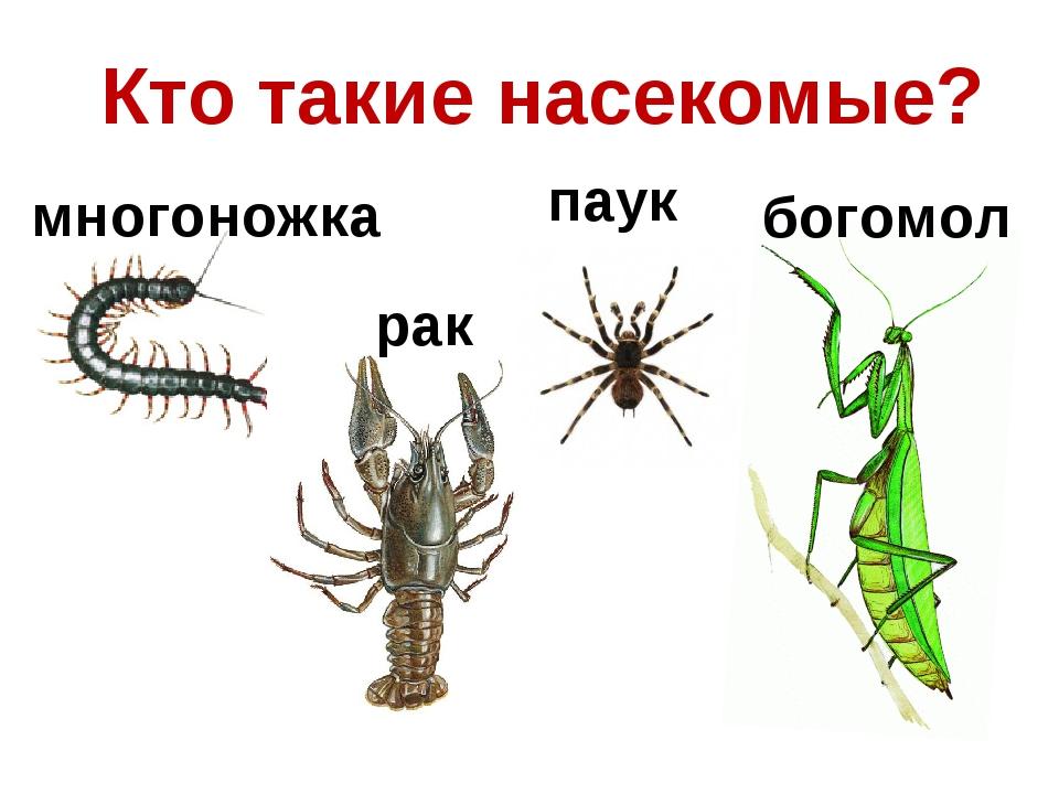 Кто такие насекомые? многоножка рак паук богомол