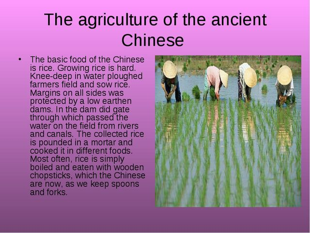 The agriculture of the ancient Chinese The basic food of the Chinese is rice....