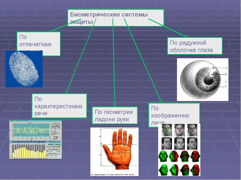 Биометрические системы защиты По отпечаткам пальцев По характеристикам речи П...
