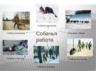 Собачья работа Собаки-поводыри Собаки-спасатели Ездовые собаки Собаки-санитар