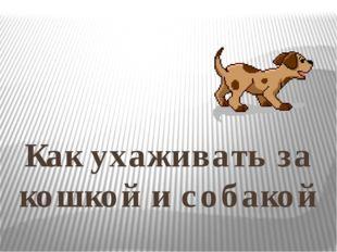 Как ухаживать за кошкой и собакой