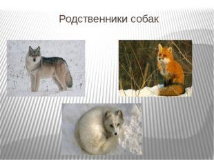 Родственники собак