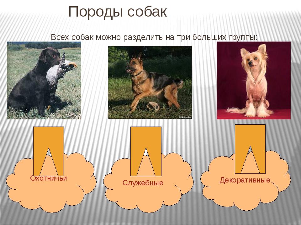 Породы собак Всех собак можно разделить на три больших группы: Охотничьи Служ...