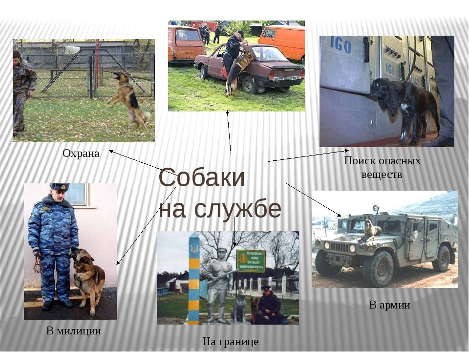 Собаки на службе Охрана Поиск опасных веществ В армии В милиции На границе