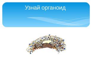 Узнай органоид