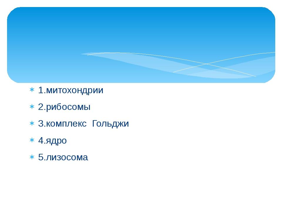 1.митохондрии 2.рибосомы 3.комплекс Гольджи 4.ядро 5.лизосома
