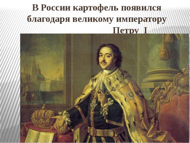 В России картофель появился благодаря великому императору Петру I