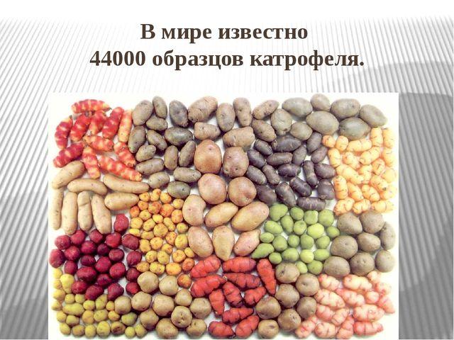 В мире известно 44000 образцов катрофеля.