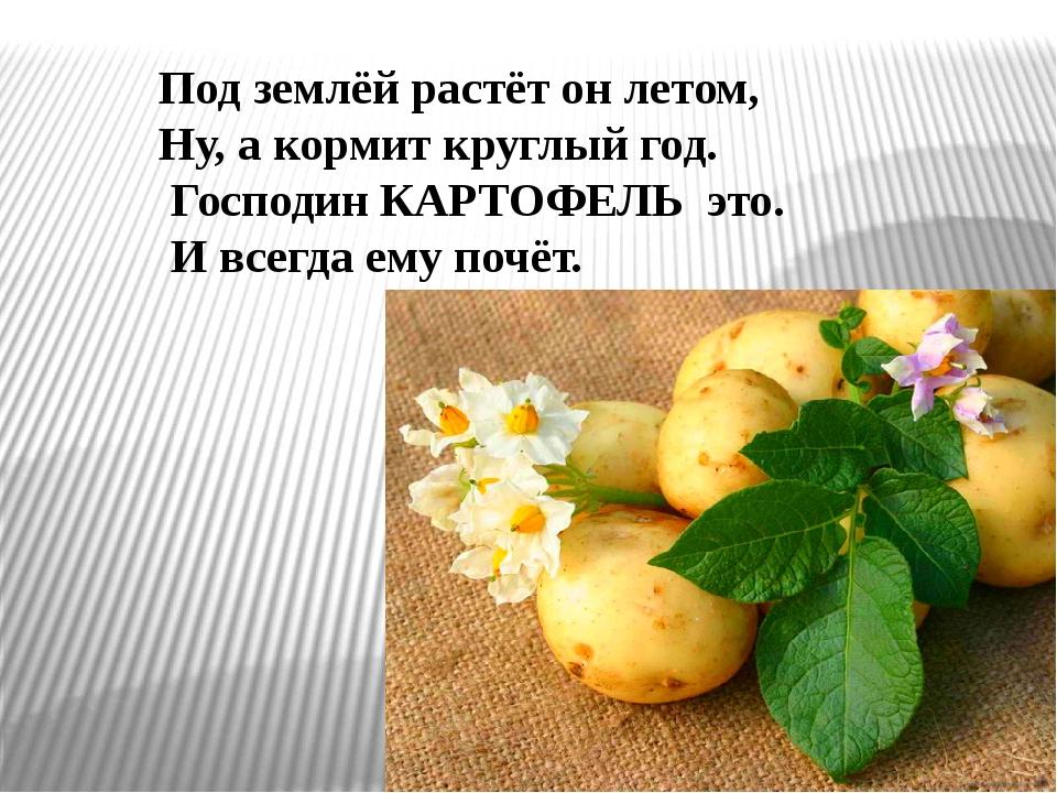Открытка про картошку 77