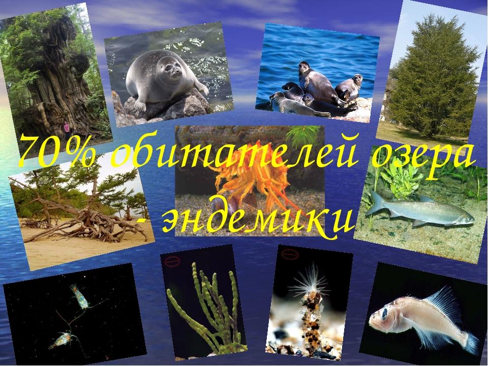 70% обитателей озера - эндемики