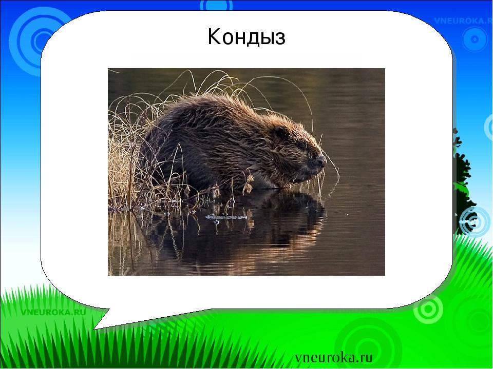 Кондыз Бу нәрсә? vneuroka.ru