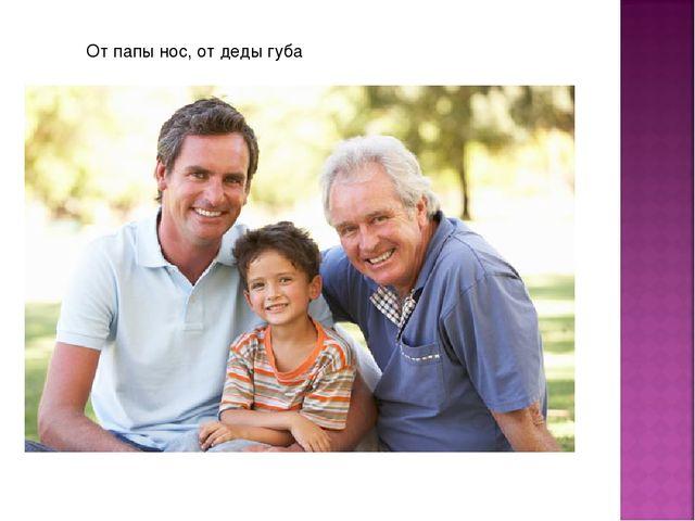 От папы нос, от деды губа