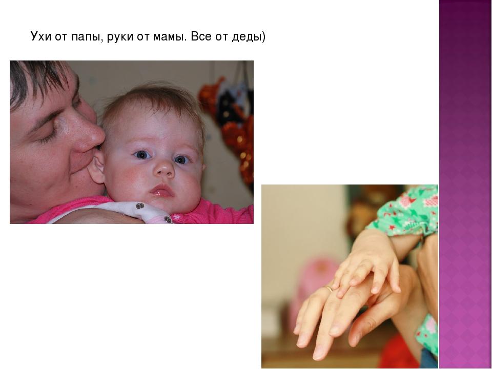 Ухи от папы, руки от мамы. Все от деды)