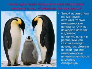 Какие адаптации позволили императорскому пингвину стать «Символом Антарктиды»