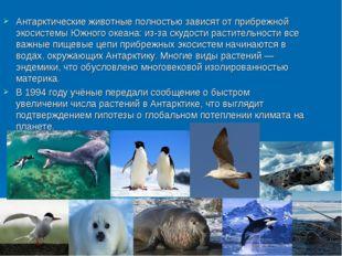 Антарктические животные полностью зависят от прибрежной экосистемы Южного ок