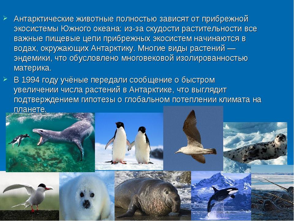 Антарктические животные полностью зависят от прибрежной экосистемы Южного ок...