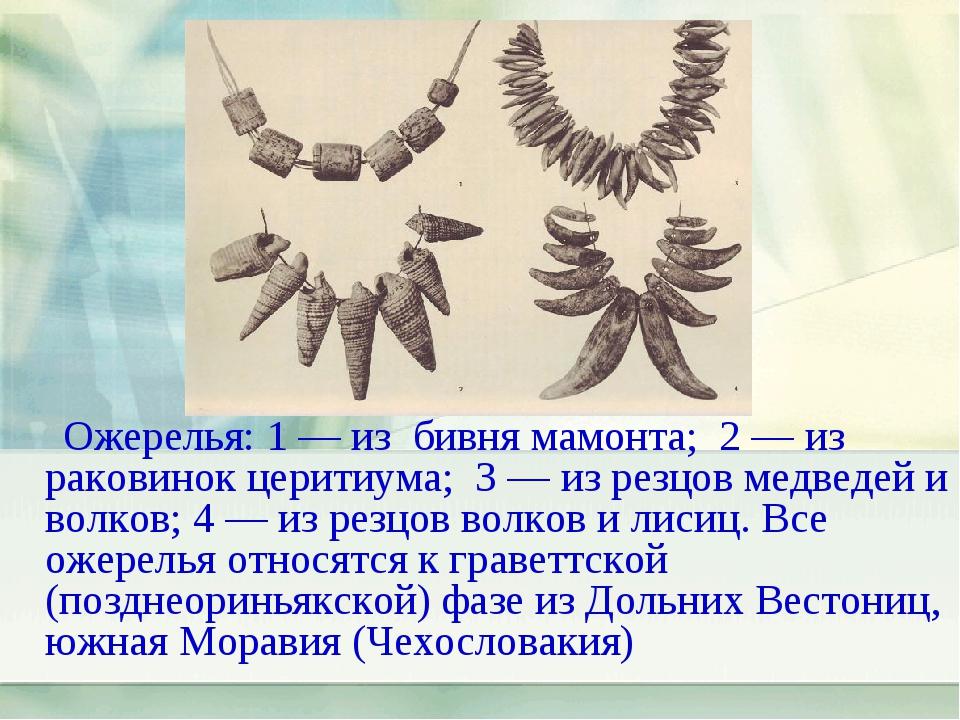 Ожерелья: 1 — из бивня мамонта; 2 — из раковинок церитиума; 3 — из резцов ме...