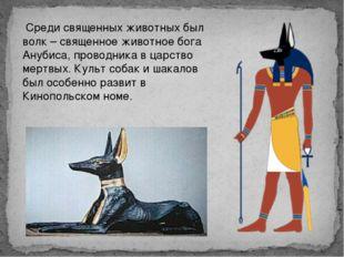 Среди священных животных был волк – священное животное бога Анубиса, проводн