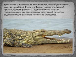Крокодилам поклонялись во многих местах, но особую значимость культ их приобр