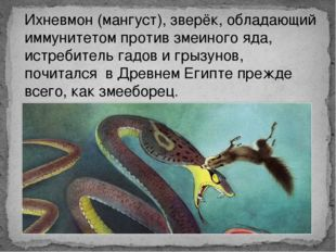 Ихневмон (мангуст), зверёк, обладающий иммунитетом против змеиного яда, истре